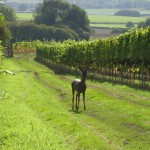 Advertiser image - Upperton Vineyards